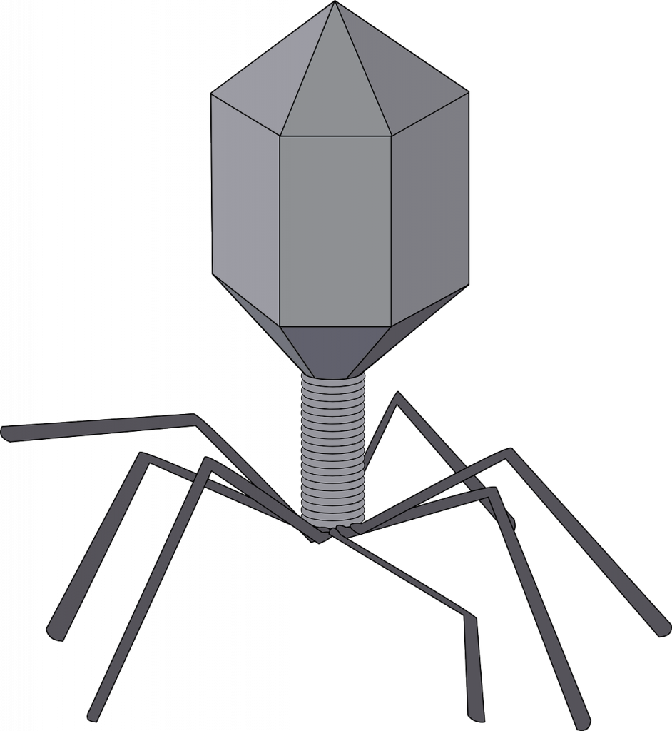 Bacteriophages can kill bacterial contamination